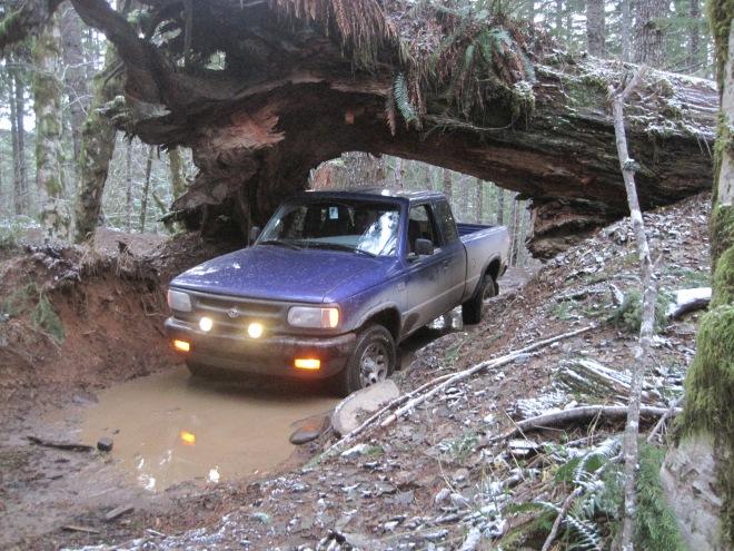 PurpleTruck under cedar